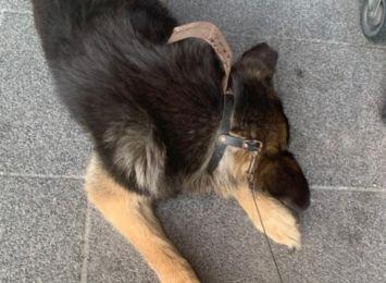 Zostawił psa przed centrum handlowym w Żorach