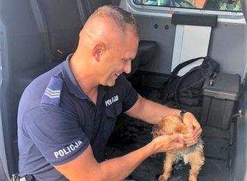 Pies zamknięty w samochodzie. Policjanci ratowali wycieńczonego zwierzaka