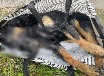 Pet Patrol alarmuje: ciało psa w torbie znalezione w Boguszowicach [DRASTYCZNE FOTO]
