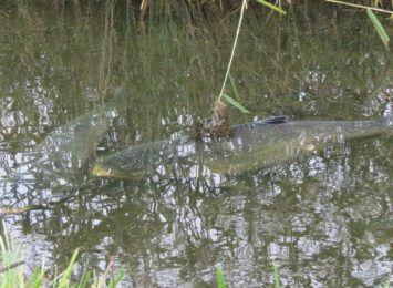 Rybnik: Kiedy poznamy wyniki badań wody ze zbiornika Orzepowice? Doszło tam do zatrucia ryb