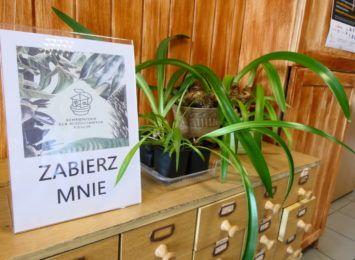 Biblioteka w Jejkowicach - miejsce dla miłośników książek i roślin