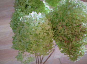 To są najpiękniejsze kwiaty końca lata. Jak zasuszyć hortensje?