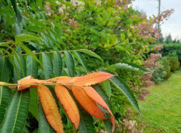 Nadchodzi jesień! Zobacz jakie prace ogrodnicze należy wykonać we wrześniu