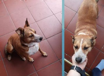 Poszukiwany właściciel psa. Apel naszego czytelnika