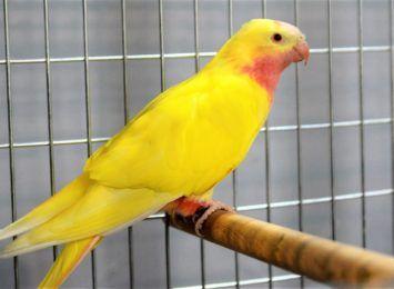 Ponad 200 ptasich okazów. Wystawa Konkursowa Kanarków i Ptaków Egzotycznych w Wodzisławiu