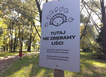 """""""Tutaj nie zbieramy liści"""". Po co ustawiono te tabliczki w Rybniku? Tłumaczy Zarząd Zieleni Miejskiej"""
