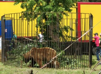 Jest wyrok dla cyrkowców, którzy znęcali się nad zwierzętami