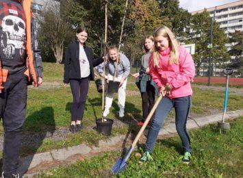 Jastrzębscy uczniowie zasadzili nowe sadzonki. To 355 drzew oraz 78 krzewów